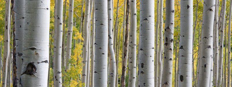 Representative Cases from Environmental Law Firm, Davis